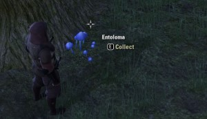 Collecting Entoloma